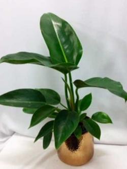 INDOOR-PLANT-MED